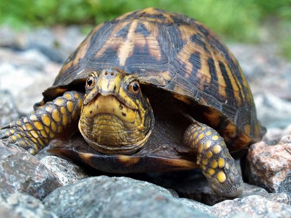 Nằm mơ thấy rùa dự báo điều gì? giải mã giấc mơ thấy con rùa