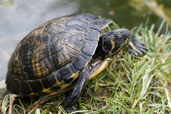 Ngủ mơ thấy rùa cắn là điềm báo không lành