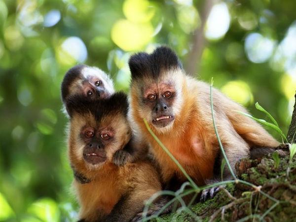 Ý nghĩa giấc mơ thấy con khỉ mang điềm báo gì ? đánh con gì ?