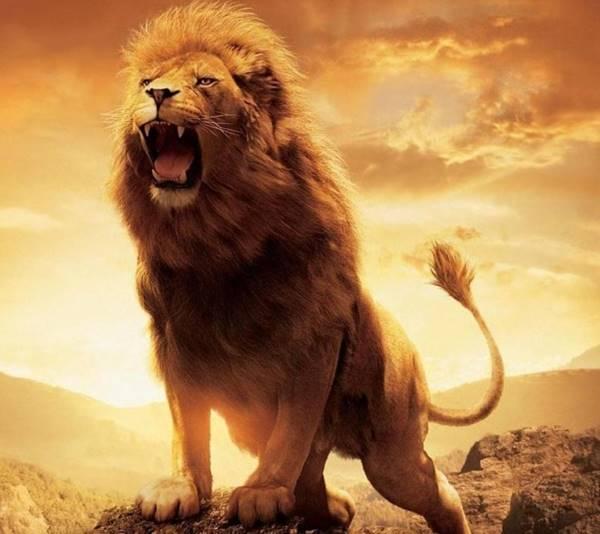 Nằm mơ thấy sư tử đánh con gì? đánh số mấy?