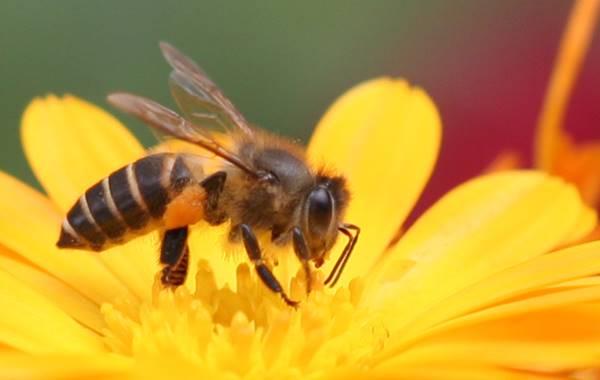 Giấc mơ thấy ong là điềm báo gì? tốt hay xấu