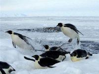 Giải mã ý nghĩa giấc mơ thấy chim cánh cụt nên đánh lô đề số nào?