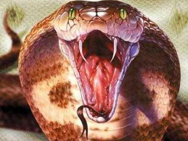 Mơ thấy rắn hổ mang là điềm báo tốt lành hay xui xẻo?