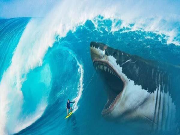 Ngủ mơ thấy cá mập - Chiêm bao thấy cá mập đánh con gì ăn chắc