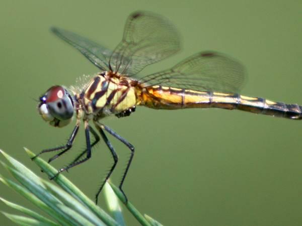 Mơ thấy chuồn chuồn mang đến điềm báo gì đặc biệt?