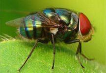 Nằm mơ thấy con ruồi là điềm báo gì đánh xổ số hôm nay con gì