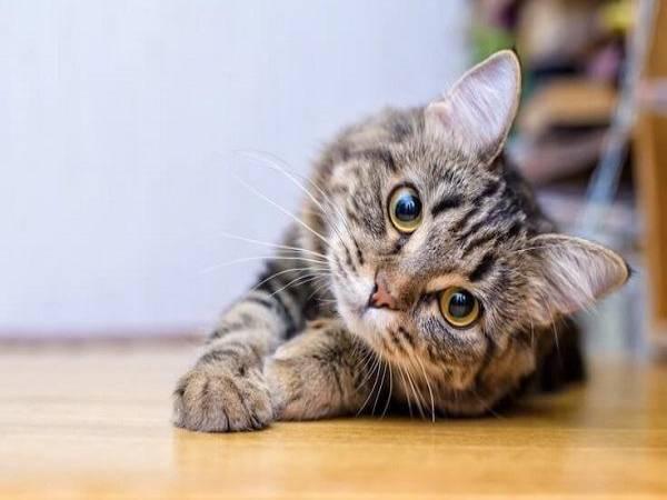 Ngủ mơ thấy mèo con là điềm lành hay dữ ? Đánh số mấy ?
