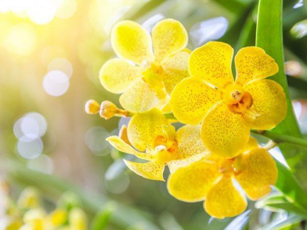Luận giải ý nghĩa giấc mơ thấy hoa lan đánh con gì?