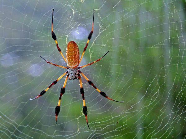 Giải mã ý nghĩa giấc mơ thấy nhện ? Đánh lô đề số mấy ?