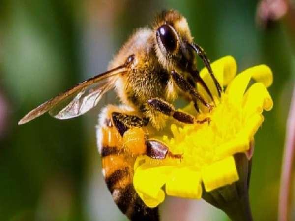 Nằm mơ thấy ong đánh lô đề con gì ? Mang ý nghĩa gì ?