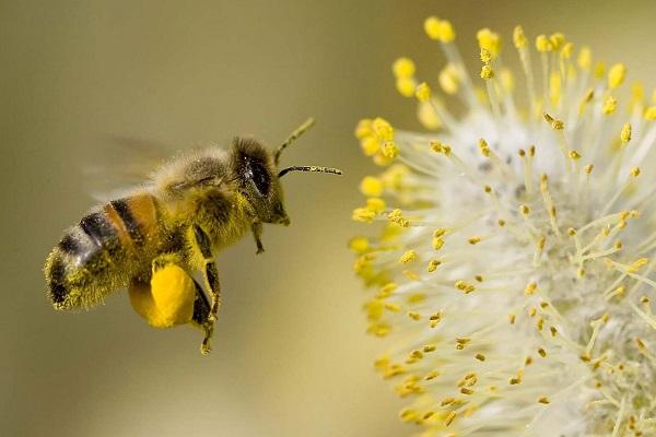 nam mo thay ong